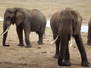 elephants at salt lick for blog